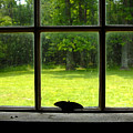 Freedom Awaits Me by David Lee Thompson
