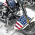 Freedom Rider by Suzanne Gaff