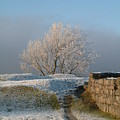 Freezing Tree by Laurence Northcote