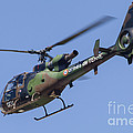 French Army Gazelle Helicopter by Timm Ziegenthaler