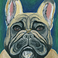 French Bulldog by Ania M Milo