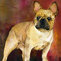 French Bulldog by Kathleen Sepulveda