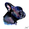 French Bulldog Portrait by Christy  Freeman