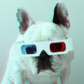 French Bulldog With 3d Glasses by Retales Botijero