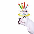 French Bulldog With Birthday Cake by Maika 777