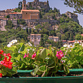 French Flowers by Scott Ricks