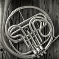French Horn 2 by Garry Gay
