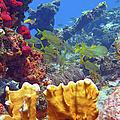 French Reef 1 by Daryl Duda