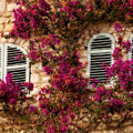 French Windows by Steven Sparks