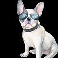 Frenchie French Bulldog Aviators Dogs In Clothes by Trisha Vroom