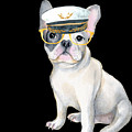 Frenchie French Bulldog Yellow Glasses Captains Hat Dogs In Clothes by Trisha Vroom