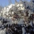 Fresc Snow by Vicky Tarcau