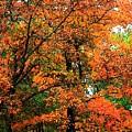 Fresco Autumn Diptych Left by Ellen Barron O'Reilly