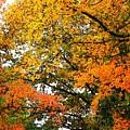 Fresco Autumn Diptych Right by Ellen O'Reilly