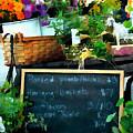 Fresh At The Farmer's Market by Elaine Plesser