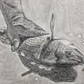 Fresh Catch by Katie Monzel