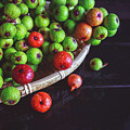 Fresh Figs by Thanh Thu Thai