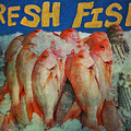Fresh Fish by Bill Cannon