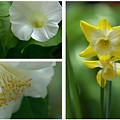 Fresh Flowers Triptych by Patricia Strand