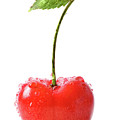Fresh Red Cherry Isolated On White by Sandra Cunningham
