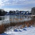 Fresh Snow Along The Creek by Bill Driscoll