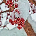 Fresh Snow by Edward Sobuta