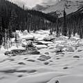 Fresh Snow In Bright Sun 2 by Royce Howland