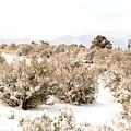 Fresh Snow by Julie Gropp