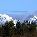 Fresh Snow On Golden Ears by Barbara  White