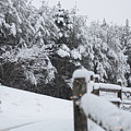 Fresh Snowfall by Pamela Smith
