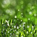 Fresh Spring Morning Dew by Christina Rollo