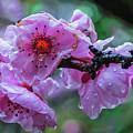Fresh Spring Rain by Mitch Shindelbower