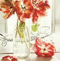 Fresh Spring Tulips In Old Milk Bottle  by Sandra Cunningham