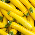 Fresh Yellow Squash  by John Trax