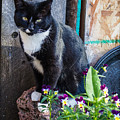 Friday The Cat by Tammy Bryant