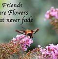 Friends Are Flowers That Never Fade by Kerri Farley