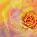 Friendship Rose Textured by Terry Davis