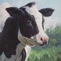Friesian Cow Portrait by Martin Davey
