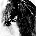 Friesian Horse Beauty by Athena Mckinzie