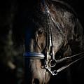 Friesian Horse Portrait Dark by Athena Mckinzie