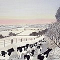 Friesians In Winter by Maggie Rowe