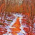 Frigid Walk by Christina M