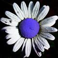 Fringe - Blue Flower by Bill Cannon