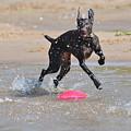 Frisbee On The Beach by Tammy Mutka
