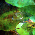Frog And Lily Pad 3076 Idp_2 by Steven Ward