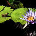 Frog And Lily Reflected by Elizabeth Gunnufson
