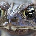 Frog Eyed by Floyd Morgan Jr