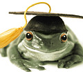 Frog Graduate by Darwin Wiggett