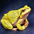 Frog - Id 16236-105000-7516 by S Lurk