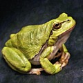 Frog - Id 16236-105016-7750 by S Lurk